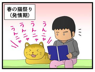 春のネコ祭り 1