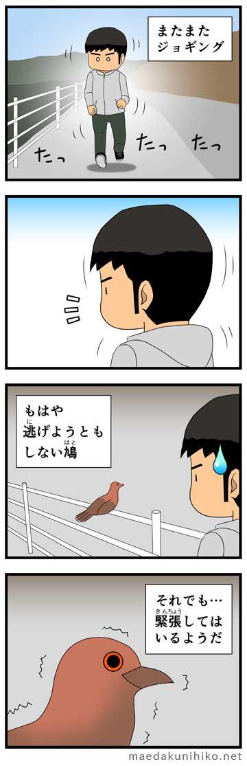 ジョギング中に鳩