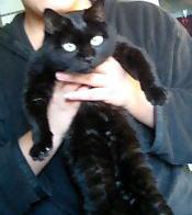 黒猫。正面から見ると意外と普通