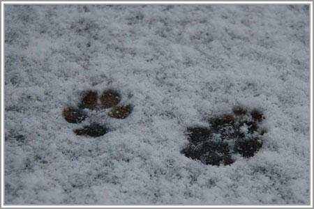 雪なのだ!03