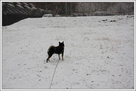 雪なのだ!04