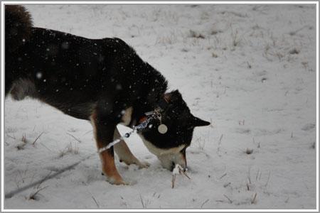 雪なのだ!06