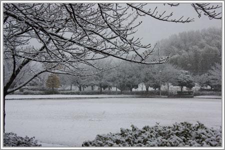 雪なのだ!08