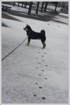 雪なのだ!10
