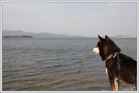 柴犬クラブオフ会in浜名湖05