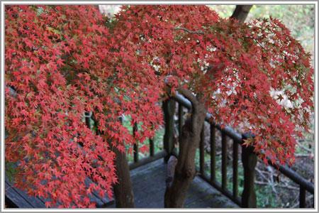 秋のほしだ園地07