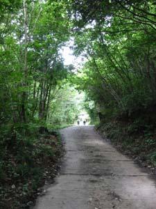 遍照寺への山道