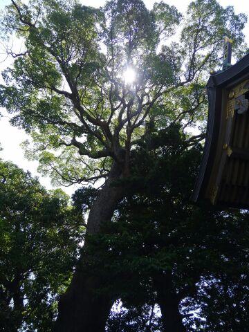 160520_樹齢千年