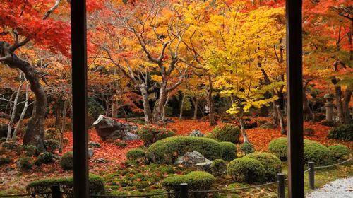 京都市の11区 | 住むなら京都 - cocoronosousei.com