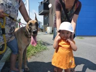 世界一大型犬!グレート・デーン!