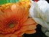 お花 from 旅の友