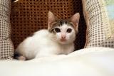 実家の猫1