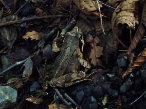 道志の森キャンプ2-5