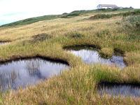 月山八合目の湿原