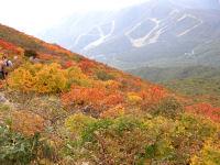 磐梯山の紅葉