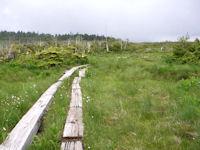 田代山頂湿原