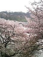 千鳥ヶ淵 武道館付近からの景色