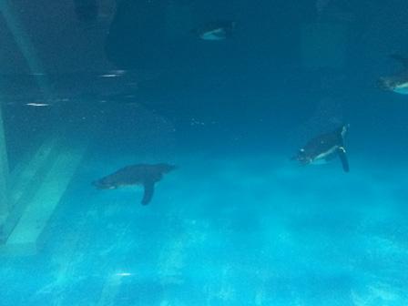 ペンギンいっぱい