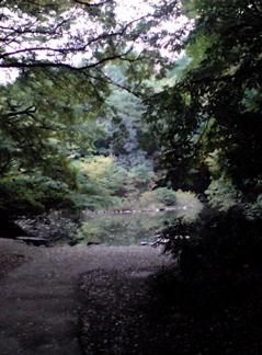 20071105三四郎池1