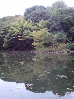 20071105三四郎池3