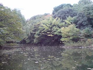 20071105三四郎池4