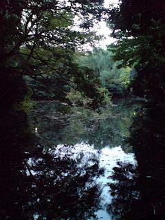 20071105三四郎池5