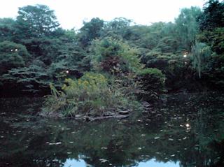20071105三四郎池6