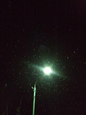 20080117初雪2-300