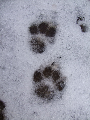 20080210雪11