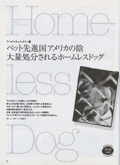 Home-less Dog1