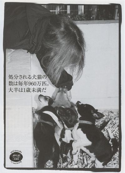 Home-less Dog2