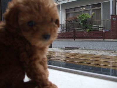 20080314雨2