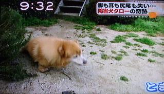 障害犬タロー1