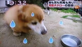 障害犬タロー2