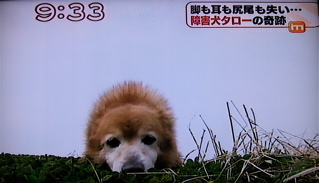 障害犬タロー3