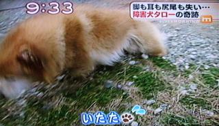 障害犬タロー4