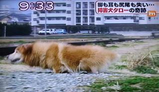 障害犬タロー6