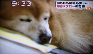 障害犬タロー8