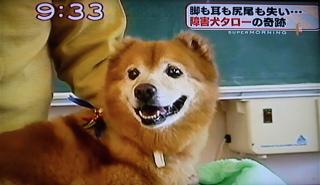 障害犬タロー10