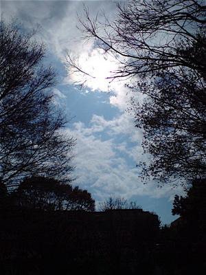 20080331桜1