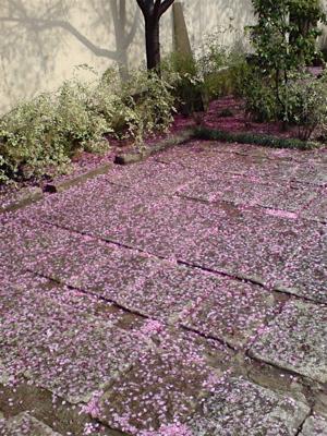 20080331桜5
