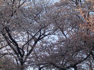 20080403-04名古屋53