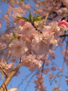 20080403-04名古屋64