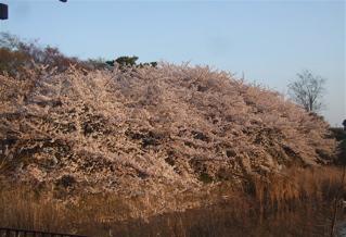 20080403-04名古屋70