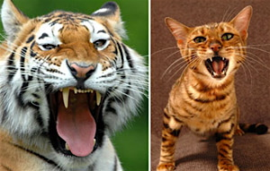 トイガー1