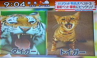 トイガー2