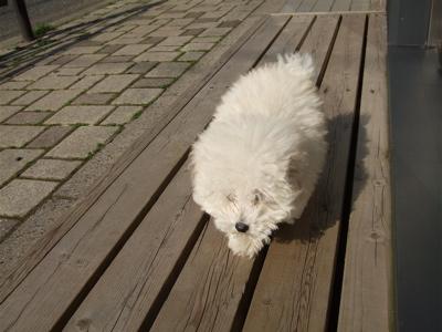 20080527ホワイトくんひなたぼっこ3