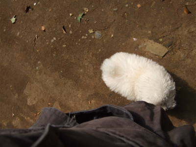 20080528ホワイトくん5