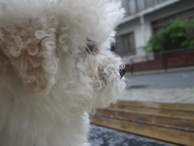 20080531雨1