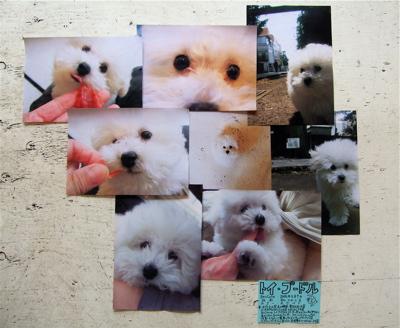 20080605ホワイトくん写真集!?